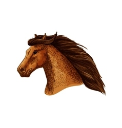 Mare or stallion head mare with thick mane vector