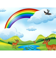 Deers and rainbow vector image vector image