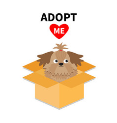 adopt me dont buy shih tzu dog inside opened vector image vector image
