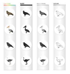 A hawk a bird of prey a pelican a gray crow an vector
