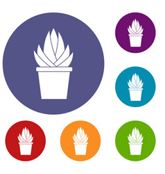 Aloe vera plant icons set vector