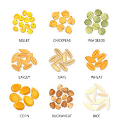 Bean and grains of seasonal plant seed icons vector