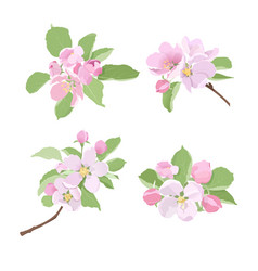 Blossoming apple tree branches with flowers vector
