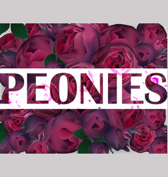 peonies background realistic background vector image