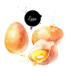 Watercolor eggs product painted isolated natural vector