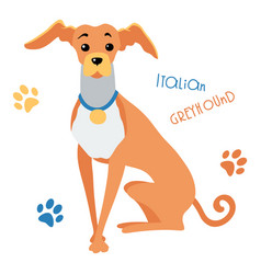 sketch funny italian greyhound dog sitting vector image vector image