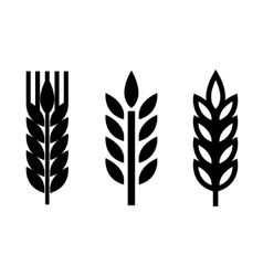 Black wheat ear spica icons set vector