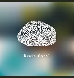 Brain coral drawing of sea vector