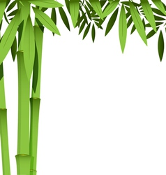 Green bamboo stems vector
