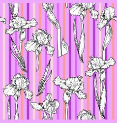 stripes violet floral vector image