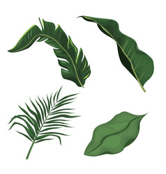 Tropical leaves palm tree plant vector