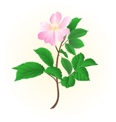 Twig wild rose leaves and flower vector image