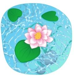 blooming lotus on shining water vector image vector image