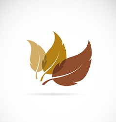 leaves icon vector image