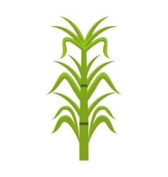 Sugar cane isolated icon design vector