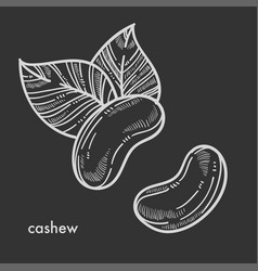 exotic oriental tasty cashew nut with big leaves vector image