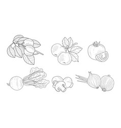 garden elements set watering can apricot and vector image