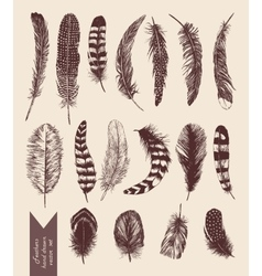 Hand drawn vintage set with feathers vector