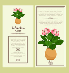 kalanchoe flower in pot banners vector image
