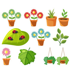 Large set nature with flowers and leaves vector