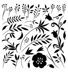 organic set plant elements and flowers vector image