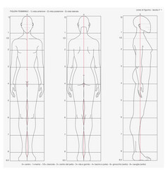 Table number one proportions female bod vector