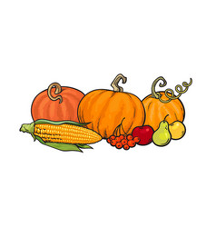 cartoon thanksgiving autumn food pumpkins corn vector image