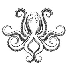 octopus engraving vector image