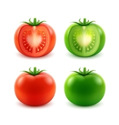 Set of ripe red green cut whole tomatoes vector