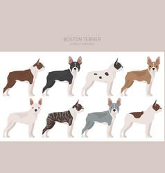 Boston terrier clipart different coat colors set vector
