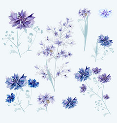 Collection cornflowers in blue and purple vector
