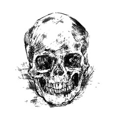 Drawing human skull on white vector image