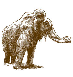 Engraving drawing of woolly mammoth vector