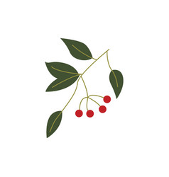 Plant branch with ripe red berries and green vector