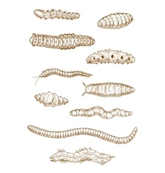 Caterpillars worms and larvae sketches vector image
