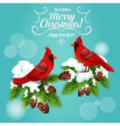 Christmas card with cardinal bird on pine tree vector image vector image