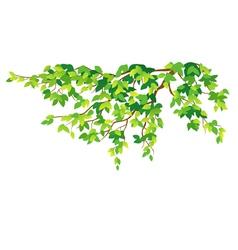 Green tree branch vector image
