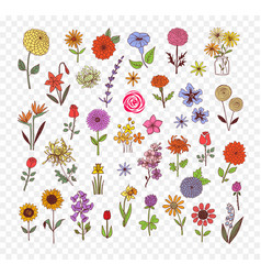 colored doodle sketch flowers vector image vector image