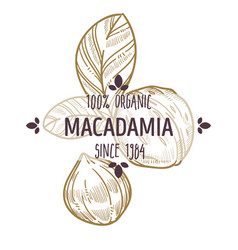 100 percent organic macadamia nut shelled and vector image