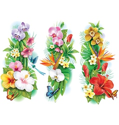 Arrangement from tropical flowers and leaves vector