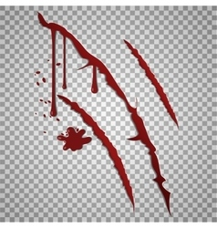 Bloody scratch marks incised wounds vector
