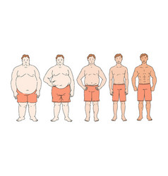 fat loss diet progress from overweight to thin vector image