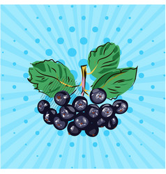 hanging bundle of chokeberry on a blue background vector image