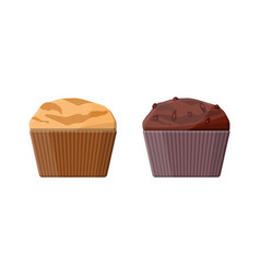 muffin set chcolate and vanilla cupcake vector image