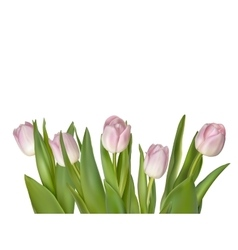 Tulips isolated on white EPS 10 vector
