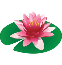 floating pink lotus vector image vector image