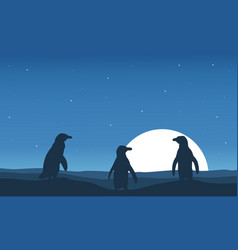 at night scenery with penguin silhouette vector image