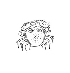 crab sketch drawing icon summer themed vector image