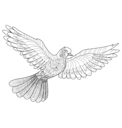 Dove coloring for adults vector image