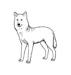 Hand drawn wolf black white sketch vector